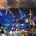 National Museum Animals of NZ